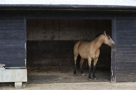 fat horse slim blue cross