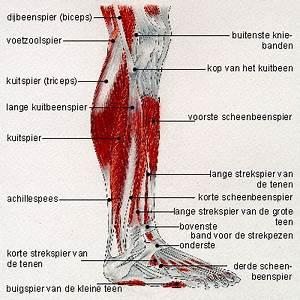 Pijn in knie bij strekken been
