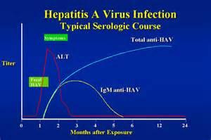 Hepatitis A Virus, Hepatitis A Virus Infection, HAV Infection  Hepatitis Infections