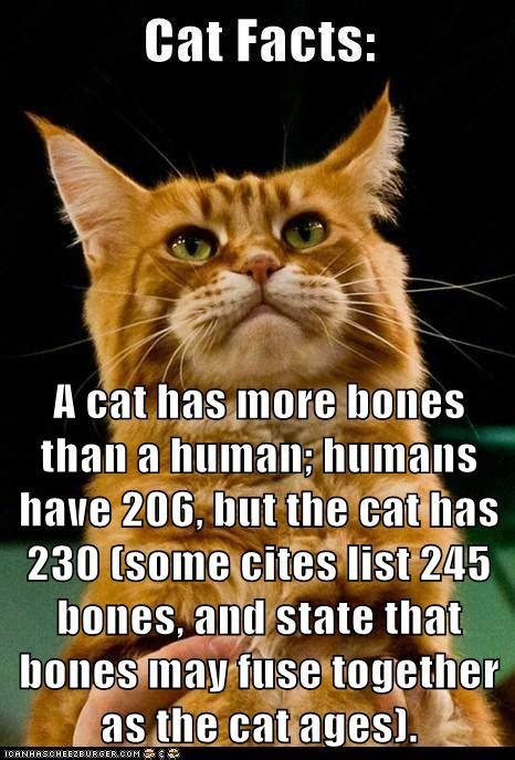 cat   bones   human humans