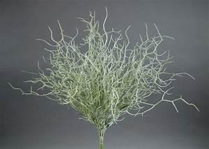 Orchideen Ohne Topf : twiggybusch stachelzweigbusch 40cm silber grau ohne topf cg kunstpflanzen k nstliche ~ Eleganceandgraceweddings.com Haus und Dekorationen