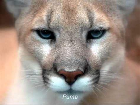 Dienvidamerikas dzīvnieki - YouTube