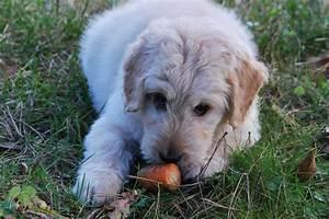 Schneckenkorn Giftig Für Hunde : was ist giftig f r hunde ~ Lizthompson.info Haus und Dekorationen