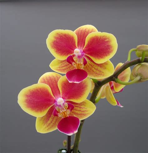 the orchid home orchid garden the general requirements interior design inspiration