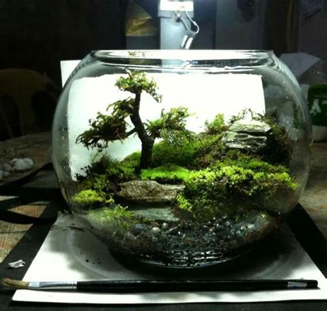 where to buy moss for terrariums moss terrarium duterte terrarium pinterest moss terrarium terraria and gardens