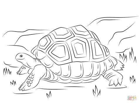 tortoise color aldabra tortoise coloring page free printable