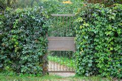 Lebender Sichtschutz Für Garten Und Terrasse by Lebender Zaun Als Sichtschutz 187 Diese Pflanzen Kommen Infrage