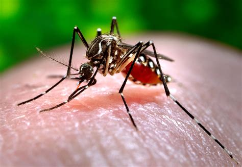 what is about mosquitoes lsu experts aim to reduce effects of zika and mosquito borne diseases
