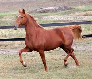 chestnut saddlebred mare 1 by venomxbaby on DeviantArt