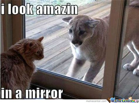 Mirror Meme - mirror memes best collection of funny mirror pictures