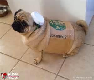 DIY Dog Halloween Costumes   ROMP Italian Greyhound Rescue ChicagoROMP Italian Greyhound Rescue