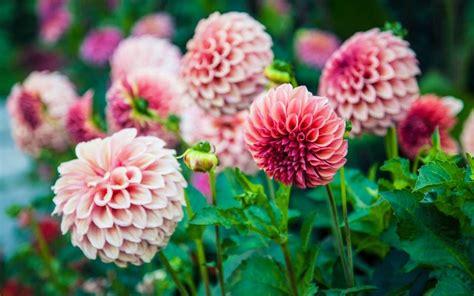 Top Plants Grow Autumn The Telegraph