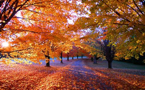 nature fall park sunrise leaves orange trees path