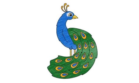 draw  peacock    draw