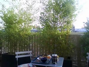 petits bambous et bambous nains selection d39especes et With bac pour bambou terrasse