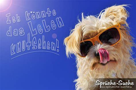lebensfroher spruch hund mit sonnenbrille spr 252 che suche