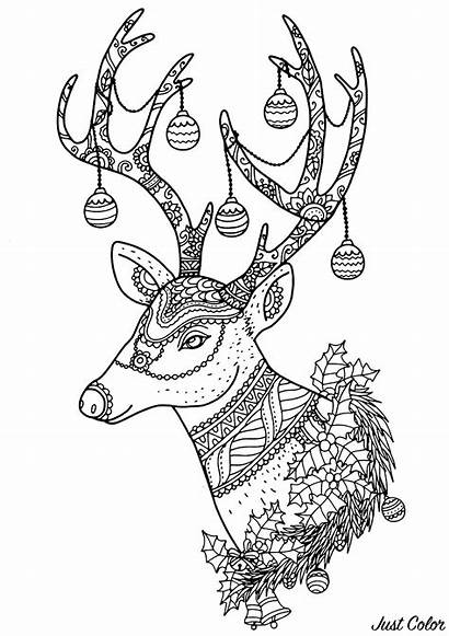 Christmas Reindeer Coloring Patterns Pages Events Adult