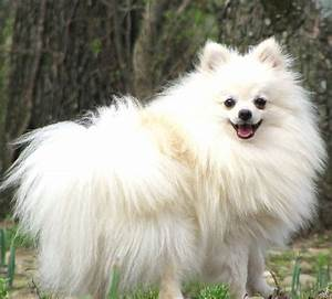 34 best images about Tiny balls of fluff!! on Pinterest ...