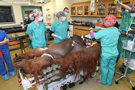 zoo brookfield orangutan surgery hospital ct grange chicago appendectomy surgeons recovering