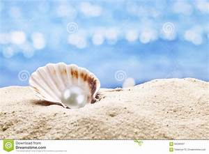 Pearl oyster in the sand. stock image. Image of background ...