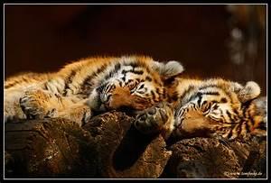 Süße Träume Bilder Kostenlos : s e tr ume zu zweit foto bild tiere zoo wildpark falknerei s ugetiere bilder auf ~ Bigdaddyawards.com Haus und Dekorationen