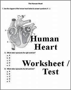 Human Heart 3 Page Worksheet  Save This For When Lucas Is