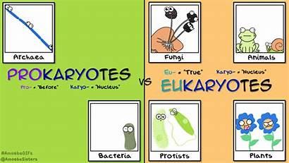 Eukaryote Prokaryote Cells Selfies Gifs Reinos Vivos