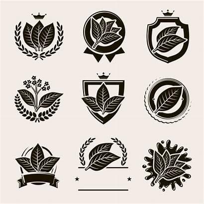 Tobacco Leaf Vector Cigar Label Labels Illustration
