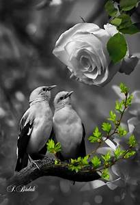 Black And White Photography With Color Splash Nature   www ...