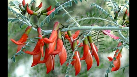 Grow Rare Unusual Plants From Seed