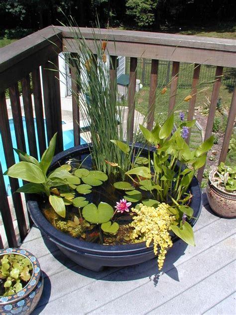 pot pour plante aquatique jardin aquatique en pot une oasis 224 mettre au balcon