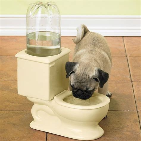 toilet bowl of water toilet water bowl for dogs
