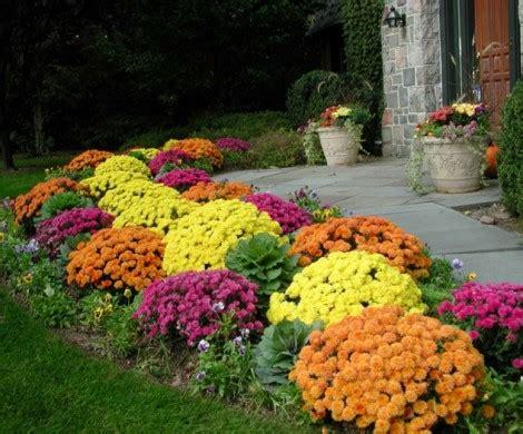 herbstblumen fuer eine farbige gartengestaltung