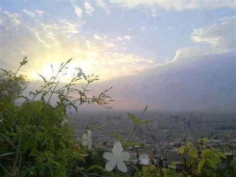 jasmine   slopes  kassioun mount syria damascus