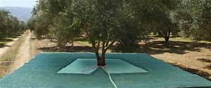 Protection Arbres Fruitiers : filet protection arbre fruitier free chep prix filet ~ Premium-room.com Idées de Décoration