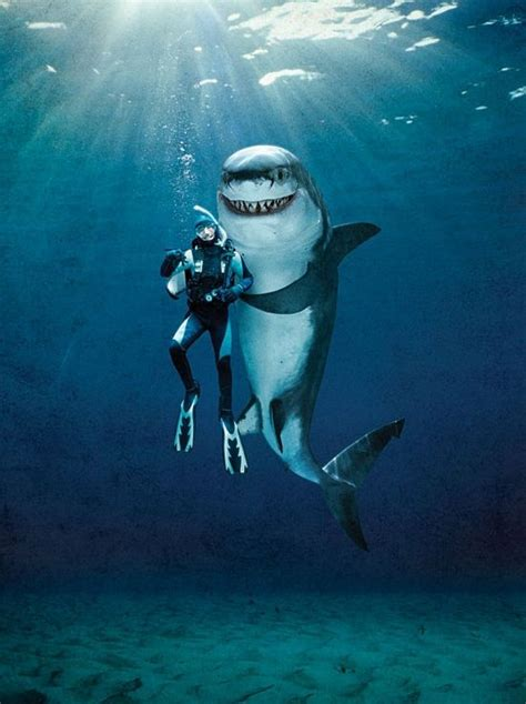 ahemlook   shark swimming shark animals