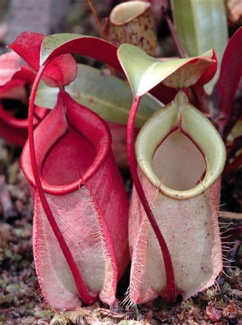 biologi edutainment bab iv pelestarian hewan tumbuhan
