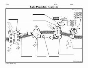 knee diagram quiz quiz cartoon wiring diagram odicis With wiring diagram quiz