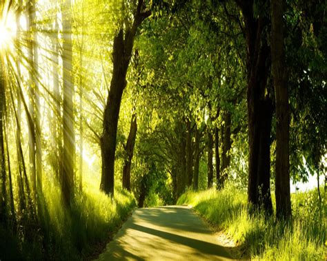 green nature backgrounds  psd ai