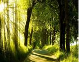 FREE 16+ Green Nature Backgrounds in PSD | AI