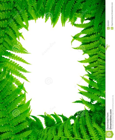 decorative ferns decorative floral fern frame stock image image of border green 2524231
