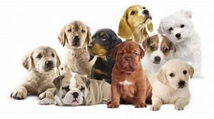 Mostra internazionale canina 105 stadium rimini hotelprincipe biz