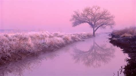 Aesthetic Nature Wallpaper by Best Aesthetic Background Hd Wallpaper Pictures