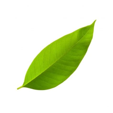 bay leaves pattern leaves pattern vectors photos and psd files free