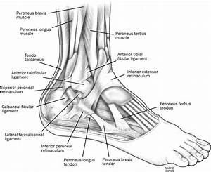 Peroneal Tendon Subluxation  The Other Lateral Ankle