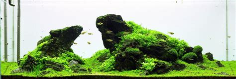 iwagumi aquascape iwagumi aquascaping wiki aquasabi