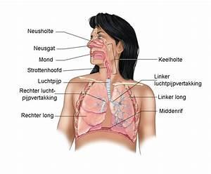 Hoesten pijn op de longen