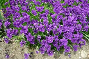Garden Plants with Purple Flowers