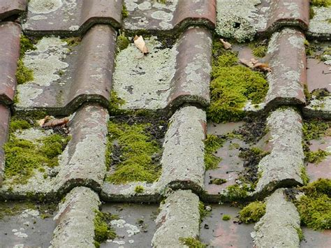 maintain moss  roof tiles jj roofing supplies
