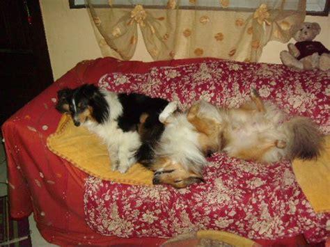 pisse canapé il fait pipi sur le canapé on sait plus quoi faire